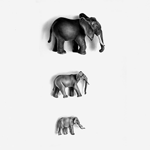 Day6: Elephants